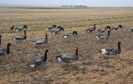 Sillosocks lokker Pink Foot/Grey Lag Goose Head Up grauwe gans kijkend 1 stuk