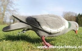 Volle geflockte pikkende duif tijdelijk uitverkocht