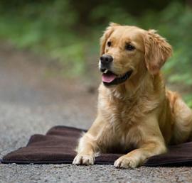 Warm Up honden deken