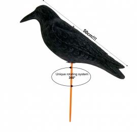 Grote geflockte wiebelkraai Magnum waggle crow