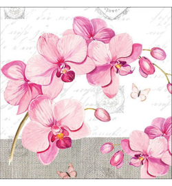 Orchids with love nrb38