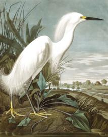 "Behangpaneel Snowy Heron ""John James Audubon (1785-1851)"" - KEK Amsterdam Wonderwalls PA-009"