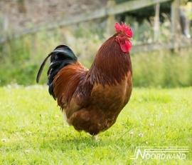 HAAN POSTERBEHANG - Noordwand Farm Life 3750069/78
