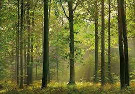 Fotobehang 00216 Autumn Forest