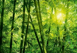 Fotobehang 00123 Bamboo Forest