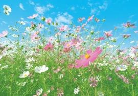 Fotobehang 00281 Flower Meadow