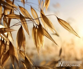 GOEDEMORGEN FOTOBEHANG - Noordwand Farm Life 3750013