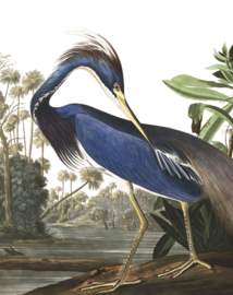 "Behangpaneel Louisiana Heron ""John James Audubon (1785-1851)"" - KEK Amsterdam Wonderwalls PA-011"
