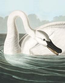 "Behangpaneel Trumpeter Swan ""John James Audubon (1785-1851)"" - KEK Amsterdam Wonderwalls PA-001"