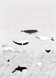 ORKA'S EN WALVISSEN FOTOBEHANG - Rasch Bambino XVIII 842531