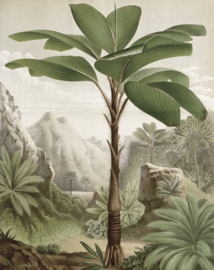 "Behangpaneel Banana Tree ""Louis van Houtte (1845)"" - KEK Amsterdam Wonderwalls PA-010"