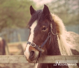 PONY POSTERBEHANG - Noordwand Farm Life 3750062/71