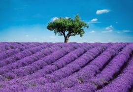 Fotobehang 00144 Provence