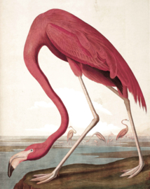 "Behangpaneel Flamingo ""John James Audubon (1785-1851)"" - KEK Amsterdam Wonderwalls PA-012"