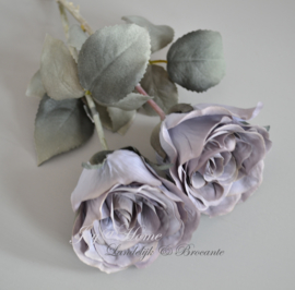 Rozen, antiek lila