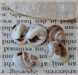 Kralen schelpjes, donkerbruin/wit
