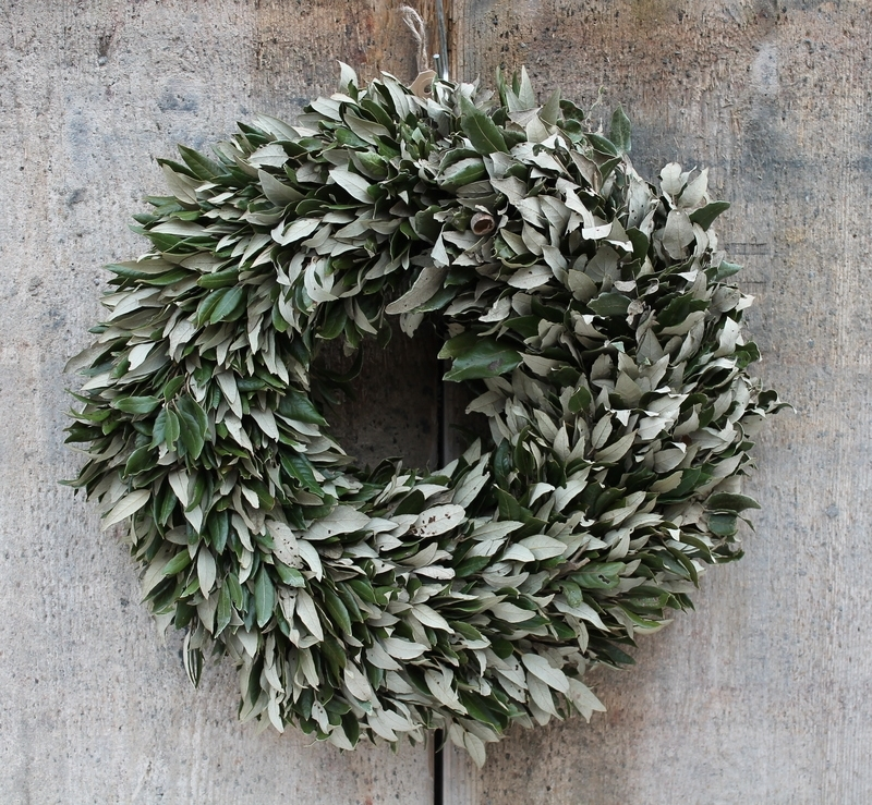 Wreath of Quercus ilex
