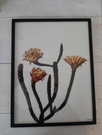Vanilla Fly Fotoprint in lijst  30 x 40 cm Plant