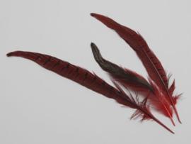 fazant veren gemengd 24 stuks | rood