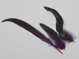 fazant veren  24 stuks | paars