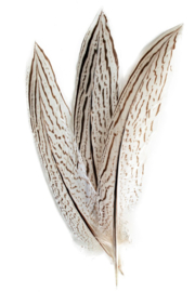 fazantveer 18 -20 cm