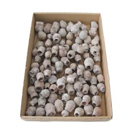 eucalyptus bells | stone washed