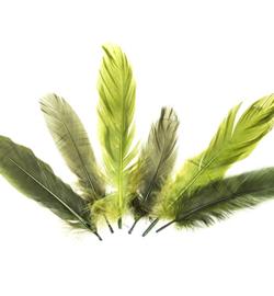 veren groen 17-18 cm