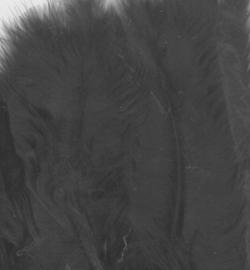 marabou veren zwart