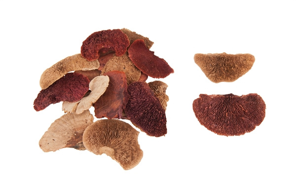 sponge mushrooms terra