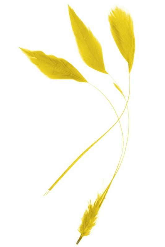 veren fly | geel
