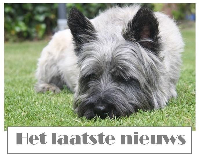 laatste nieuws voor je hond en kat