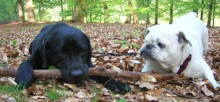 honden maatjes