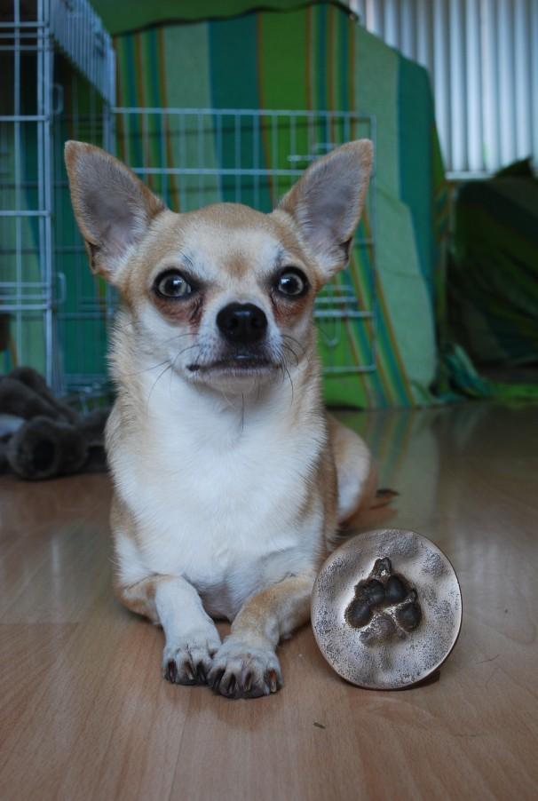 peanut met zijn pootafdruk in brons