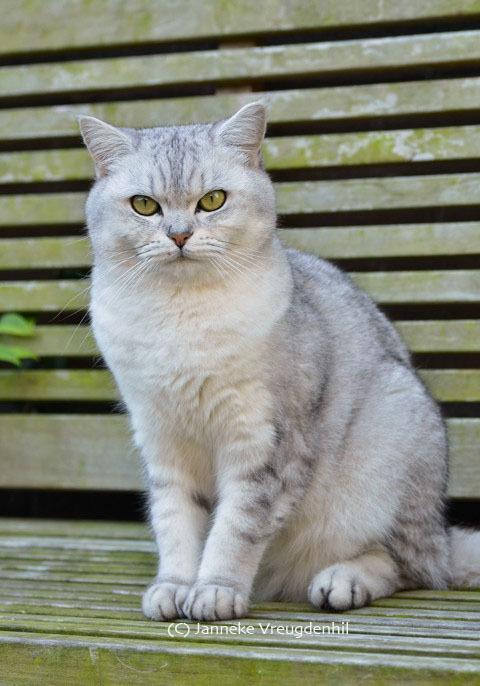 Pootafdruk in brons van kat