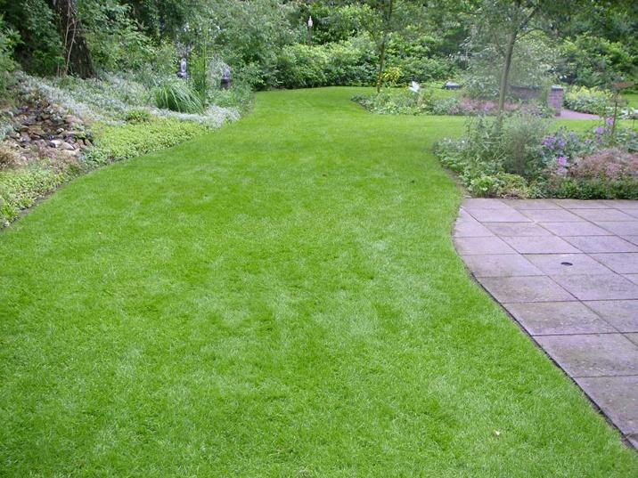 foto mooie tuin met donkergroen gazon