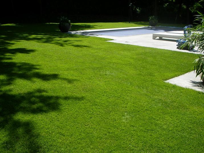 foto mooi gras met zwembad