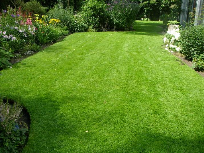 foto met mooie tuin met gras als een dik tapijt