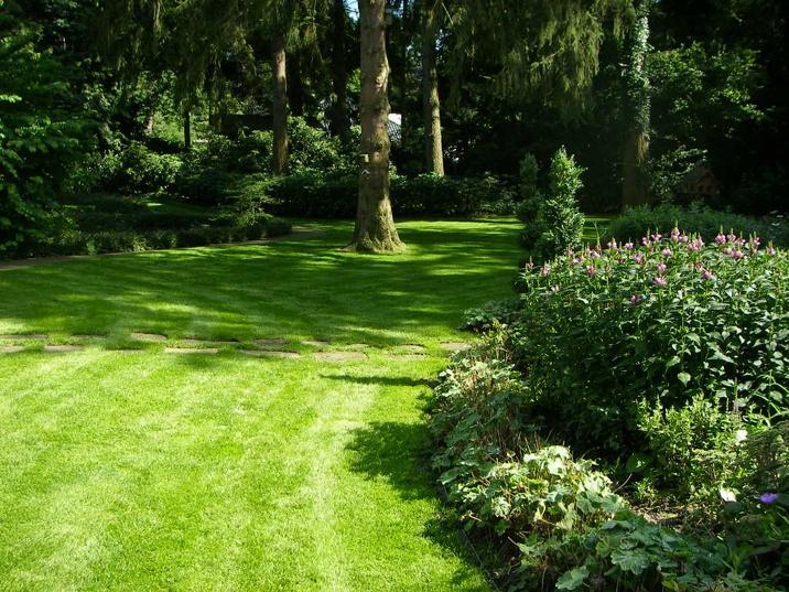 foto met groen gras en hoge groen bomen met struiken