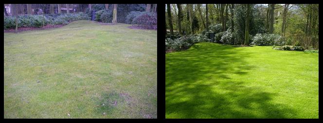 foto 02 voor en tijdens het gras onderhoud Rotterdam