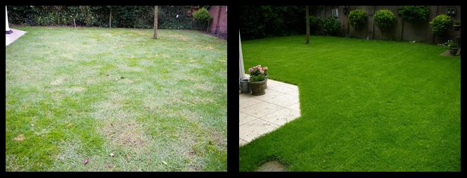 foto 03 voor en tijdens het gras onderhoud