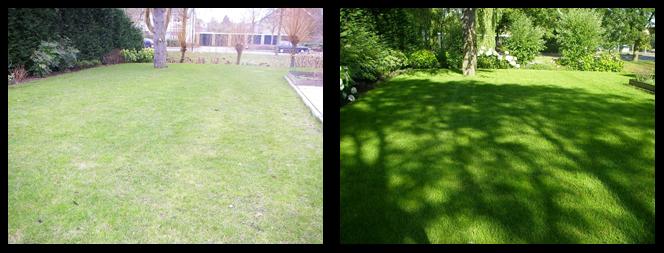 foto 04 voor en tijdens het gras onderhoud Utrecht