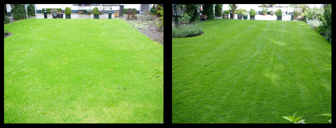 foto 06 voor en tijdens het gras onderhoud Tilburg