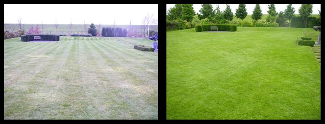 foto 08 voor en tijdens gras onderhoud