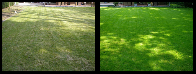 foto 09 voor en tijdens gras onderhoud