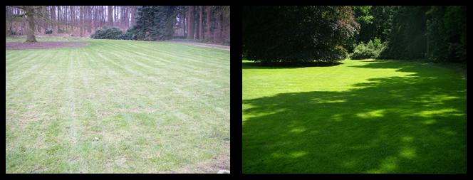 foto 10 voor en tijdens gras onderhoud