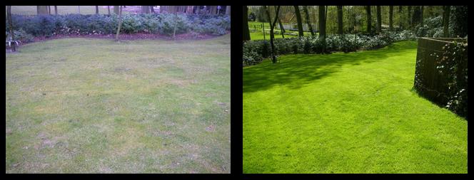 foto 11 voor en tijdens gras onderhoud Apeldoorn