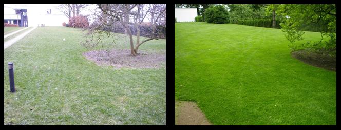 foto 12 voor en tijdens gras onderhoud