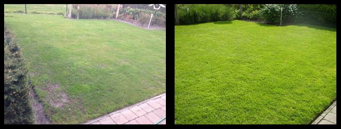 foto 15 voor en tijdens gras onderhoud