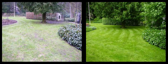 foto 16 voor en tijdens gras onderhoud