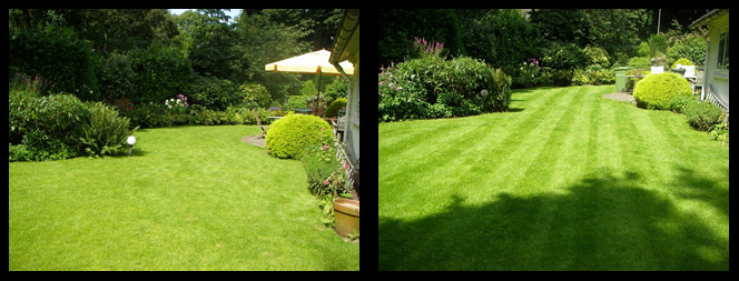 foto 18 voor en tijdens gras onderhoud